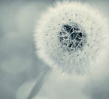 dandelion blues by Ingz
