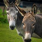 Donkey Double by FranJ