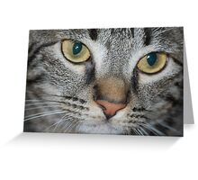 Furry Friends... Greeting Card
