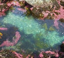 Rockpool Gardens... by debsphotos