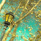 Autumn Gold Leafs in Turquoise Sky  by Andreka