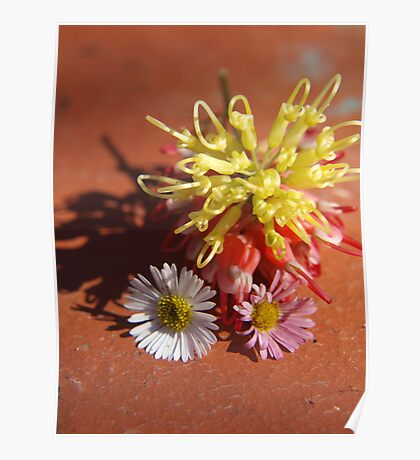 Daisies and Grevillea Poster