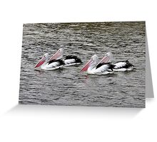 The Pelicans came in 2X2 Greeting Card