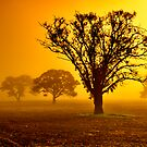 """""""In The Mists Of Dawn"""" by Phil Thomson IPA"""