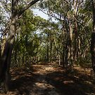 Mt Kinglake before the fires by Anthony Cook