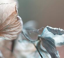Delicate by Sherilyn Hawley