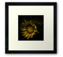 August Light Framed Print