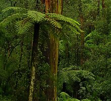 Rain Forest. by Bette Devine