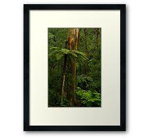 Rain Forest Framed Print
