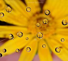 Floral Drops.......... by AroonKalandy