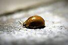 Lady Bug I by Adam Le Good