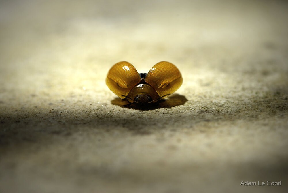 Lady Bug II - Ready for take off by Adam Le Good
