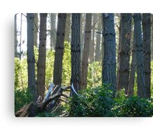 Never Interrupt a Horticultural Branch Meeting Canvas Print