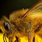 Buzz Buzz by Andrew Widdowson