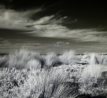 Phillip Island - Coastal Grass Wild by lightsmith
