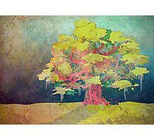 Ancient Oak Photographic Print