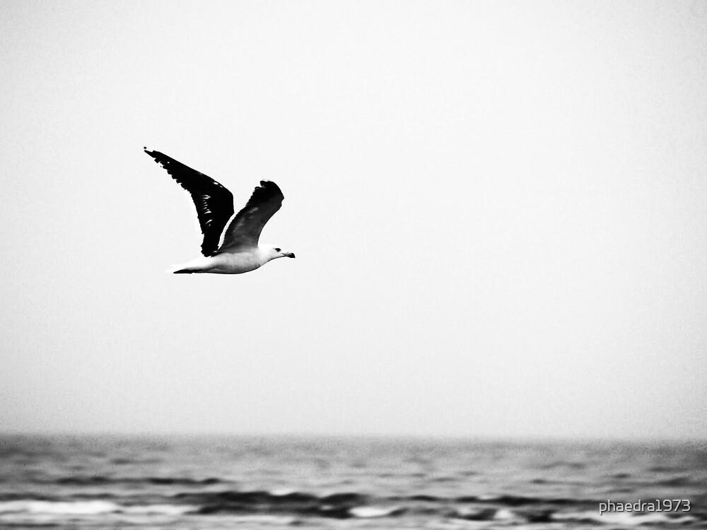 Soaring Nova Scotia Gull by phaedra1973