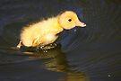 Little Duck by Jo Nijenhuis