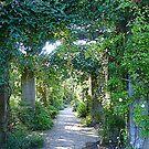 Leafy Walkways by Fara