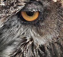Eagle Eye by LydiaBlonde