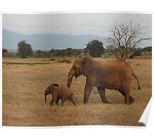Mother and Baby African Elephants Poster