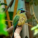 Colorful Male Bird by Randall Robinson