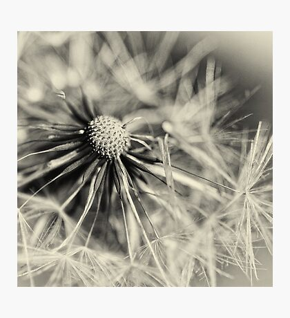 Another Blowball... (square) Photographic Print