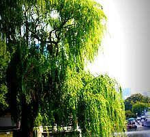 Weeping Willow by the Charles River by Amanda Vontobel Photography/Random Fandom Stuff