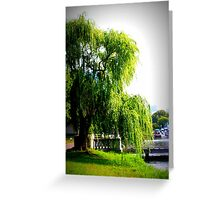 Weeping Willow by the Charles River Greeting Card