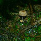 Mushroom Houses by starwarsguy