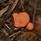 Bubblegum Fungus by starwarsguy