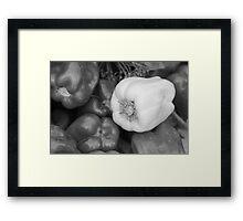 Albino Bullnose Pepper BW Framed Print