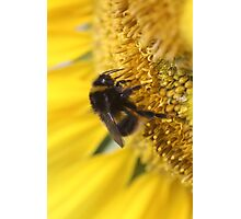 Buzzy bumble bee Photographic Print