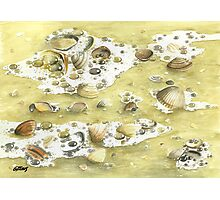 SHELLS ON THE BEACH Photographic Print