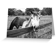 STAYING IN BARN Greeting Card