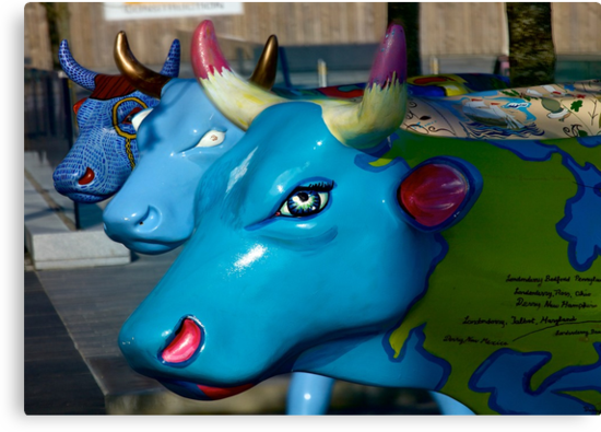 Three Cows on Parade, Ebrington Sq, Derry by George Row