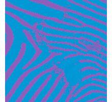 Blue Zebra Photographic Print