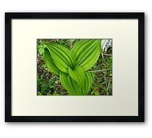 Rain Drops (available in iphone & ipod cases) Framed Print