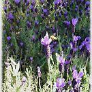 Beeutiful Lavender by Jess Meacham