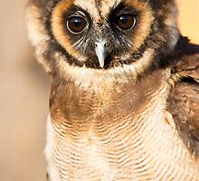 Brown Wood Owl by Ellesscee