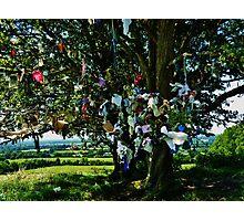 Fairy Tree Tara hill  Photographic Print