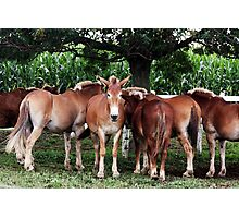 Outstanding In the Field Photographic Print