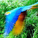 Bird, Flying Solo! by photoj