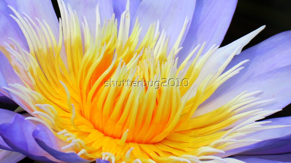 Golden Flame by shutterbug2010