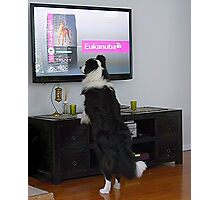 Clever dog  'Ollie'.........................! Photographic Print