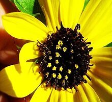 Yellow Flower with Bee by nmephotography