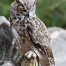 Great Horned Owl 2 by Ellesscee