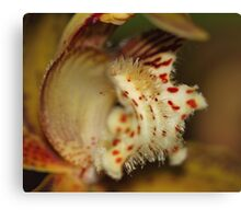 Orchid in Super Macro Canvas Print
