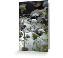 Nature of NZ Greeting Card
