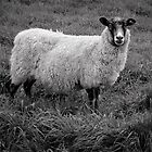 Sheep in Monochrome by Ari Salmela
